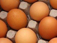 Инкубация яиц домашней птицы в домашнем инкубаторе